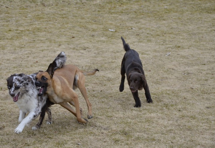 Den viktige valpeleken – kunsten å få en sosial hund
