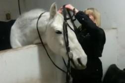Apporteringsträning för hästar
