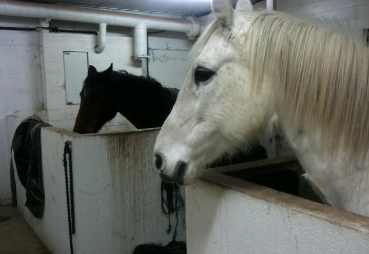 Såhär börjar du klickerträna hästar