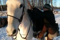 Klickerträning från hästryggen