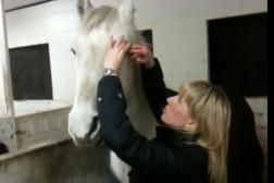 Kom igång med att klickerträna din häst!