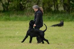 Hvordan lære hunden at præstere i længere tid før belønningen kommer?
