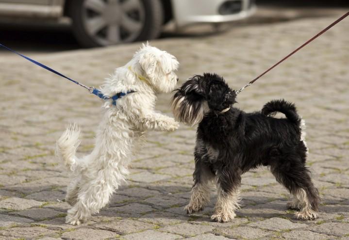 Møte med andre hunder – i bånd