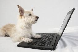 Lær klikkertrening på nett!