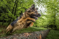 Canis` klikkerINSTRUKTØRkursus