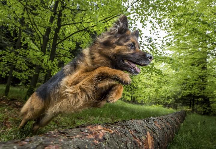 Instruktørutdannelse hos Canis