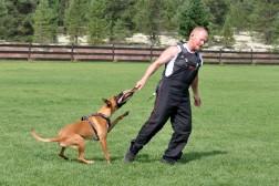 Træning af hund i såkaldte forsvarsprogrammer