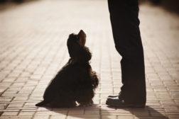 Å trene slik at hunden velger å være med.