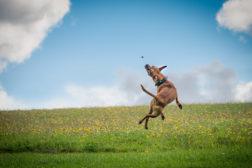 Støt Hundesport mod Cancer