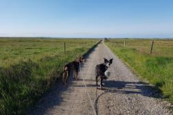 Clickercamp hos Canis avdeling Vesløs