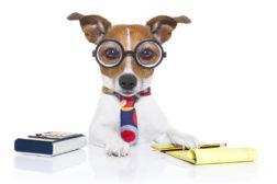 Vitenskapelig hundetrening?