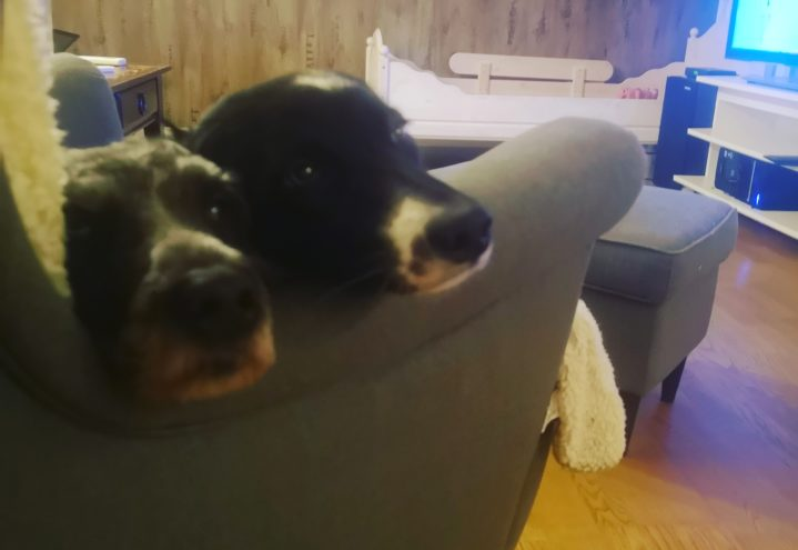 Nyttåraften – Alle hundeeieres mareritt?