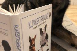 Smakebit på positiv trening med hund på en to tre timer (ingen ledige plasser)
