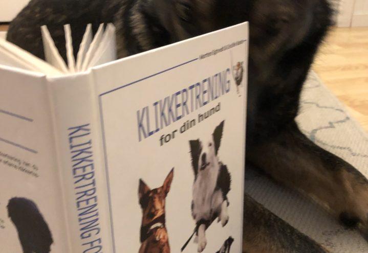 Smakebit på positiv trening med hund på en to tre timer