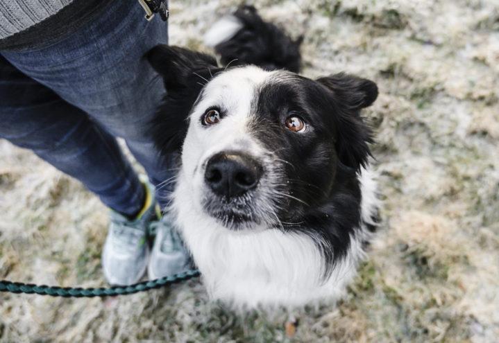 Forstå hunden! – Atferd, problematferd, utfordring og aktivisering