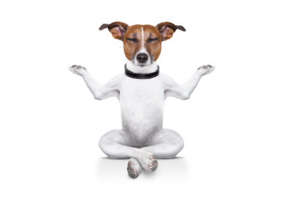 Første økt med doggie-zen