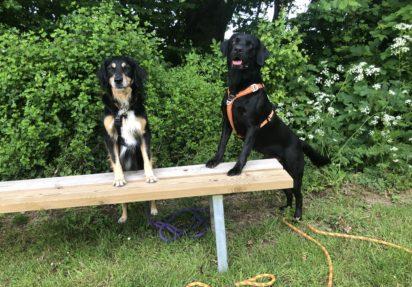 Dogparkour for konkurrencehunde