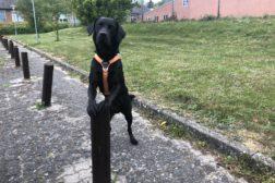Dogparkour – fortsætter