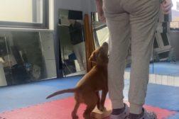 9 uker gammel valp lærer utgangsstilling på to økter
