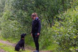 Helgekurs i bruk av betinget forsterker klikker/fløyte i hundetrening